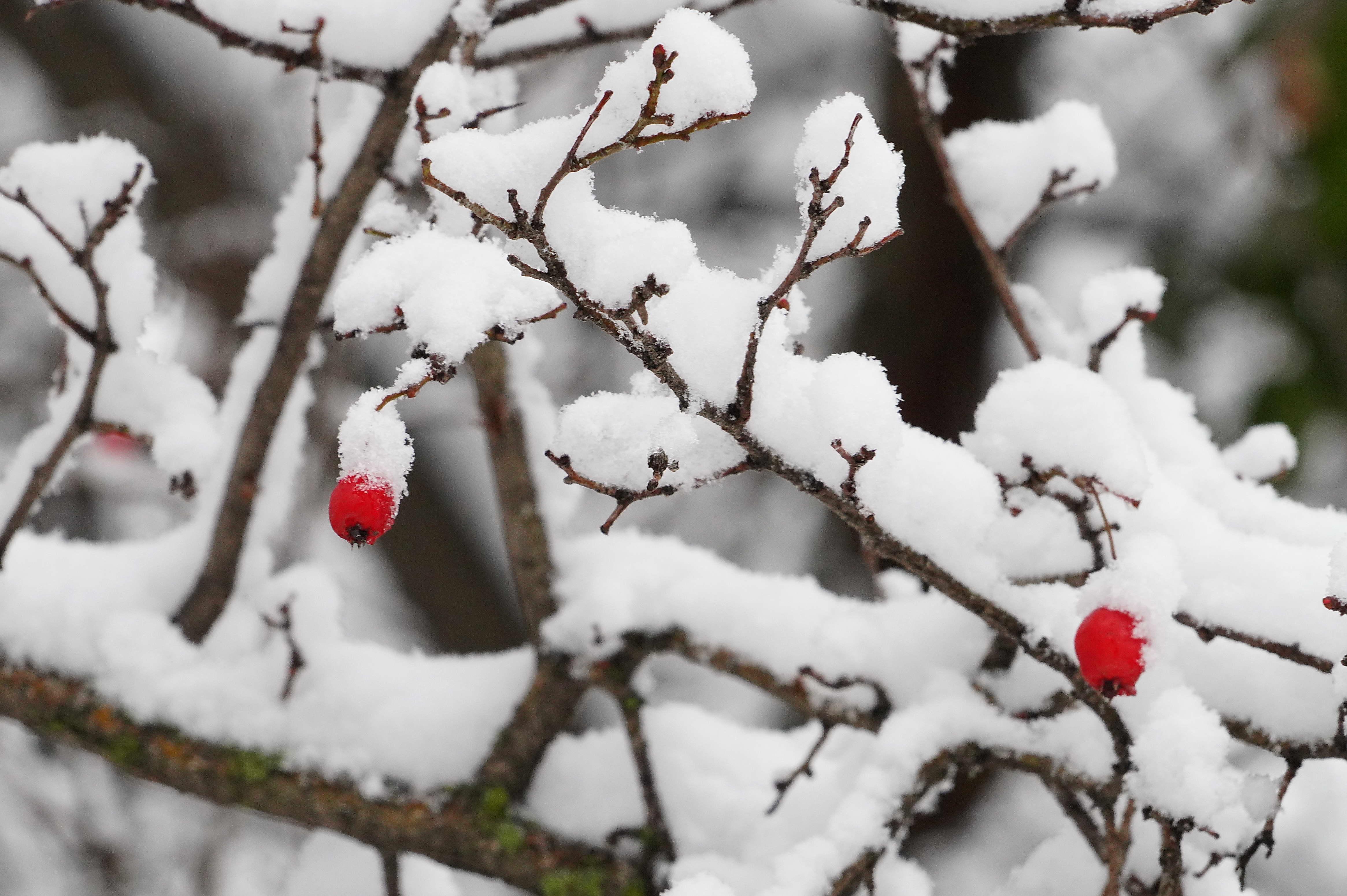 UZBEKISTAN-TASHKENT-SNOWFALL